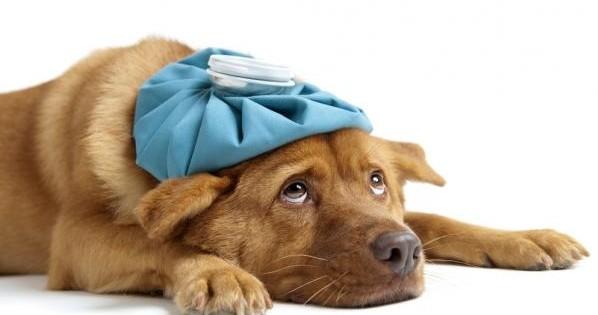 Το Φαρμακείο του Σκύλου: Όλα όσα θα πρέπει να περιέχει το φαρμακείο του σκύλου μας