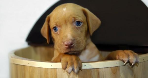 Τυφλά τα σκυλίσια γαλάζια μάτια; Μύθος!