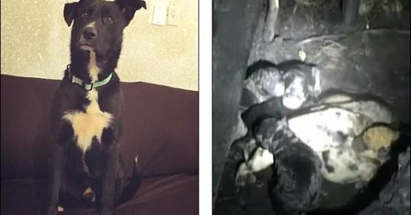 Δείτε πώς αυτός ο σκύλος έσωσε 10 κουτάβια και τη λεχώνα μητέρα τους από βέβαιο θάνατο! (εικόνες,βίντεο)
