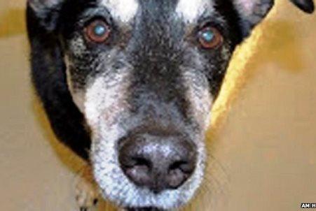 Φράνκι: Ένας σκύλος που δίνει γνωμάτευση για τον καρκίνο