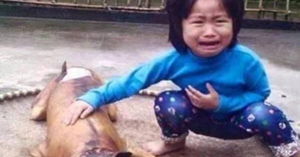 Δεν υπάρχουν λόγια: Συγκλονίζει η φωτογραφία της πεντάχρονης που της μαγείρεψαν τον σκύλο….