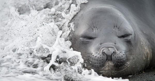 Μοναδικές φωτογραφίες ζώων στην άγρια φύση