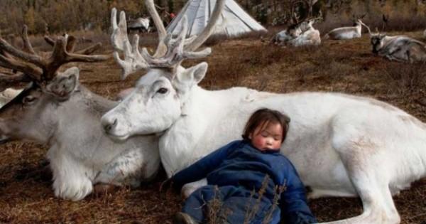 Μογγολία: Η καθημερινή ζωή των ανθρώπων που ζουν μαζί με ταράνδους και τους εκτρέφουν (εικόνες)