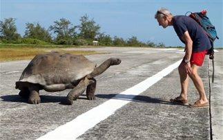 Τι τι γίνεται όταν διακόπτει κανείς χελώνες την ώρα της… ερωτικήs πράξης! (βίντεο)