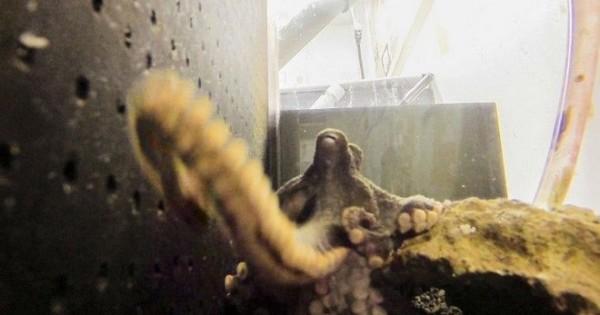 Έξυπνο χταπόδι κλέβει τη φωτογραφική και βγάζει φωτογραφίες από το κλουβί του!