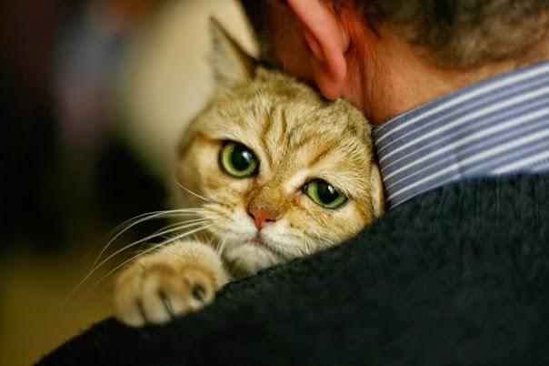 αγκαλιά γάτας