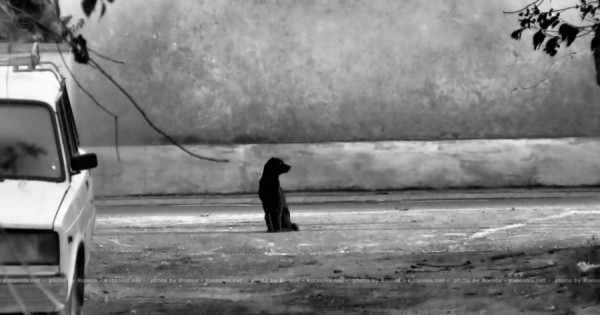 Δείτε πως νιώθει ένα ζώο όταν το εγκαταλείπουν… Ας γίνουμε καλύτεροι άνθρωποι! (video)