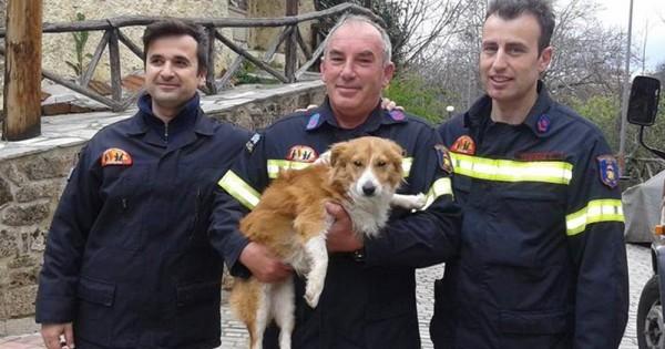 Φωτογραφίες: Πυροσβέστες έσωσαν σκυλάκι που έπεσε σε ποτάμι στη Βέροια