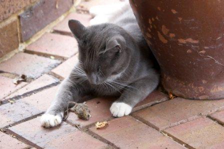 Γιατί οι γάτες φέρνουν τη νεκρή λεία τους στο σπίτι
