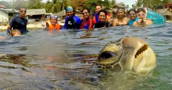 Το… photobomb της θαλάσσιας χελώνας (Φωτογραφία)