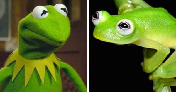 Ανακαλύφθηκε ένα νέο είδος βάτραχου που μοιάζει με τον Κέρμιτ! (Φωτογραφίες)