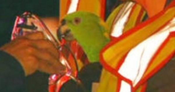 Παπαγάλοι σώθηκαν από τις φλόγες φωνάζοντας «βοήθεια»! (εικόνες)