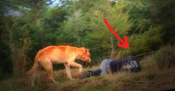 Δείτε τι έκανε ένας αδέσποτος σκύλος όταν προσποιήθηκε ότι κάτι έπαθε και ξάπλωσε κάτω (Εικόνες)