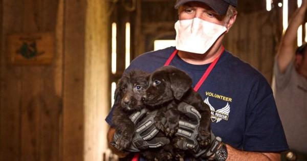 Όταν πήγαιναν να σώσουν αυτά τα κουτάβια, δεν περίμεναν να αντικρίσουν κάτι τόσο φρικτό… (Σκληρές εικόνες)