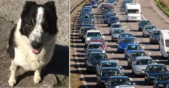Δείτε τι έκανε ο σκύλος της φωτογραφίας και προκάλεσε αυτό τον πανικό και θα μείνετε άφωνοι!