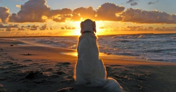 5 απίστευτα πράγματα που οι σκύλοι διαισθάνονται πριν συμβούν!