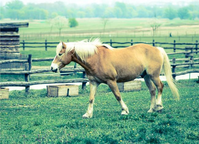 στρες άλογα
