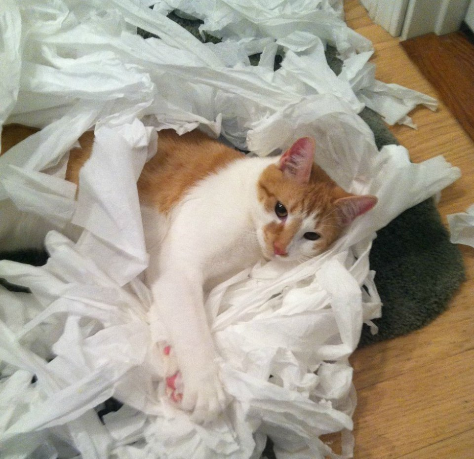 χαρτί υγείας ζώα Εικόνες
