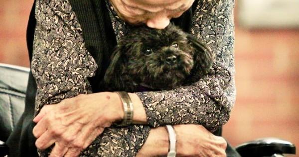 Συγκινητικό: Μικροσκοπικό σκυλί σκορπά την αγάπη σε γηροκομείο (Βίντεο)
