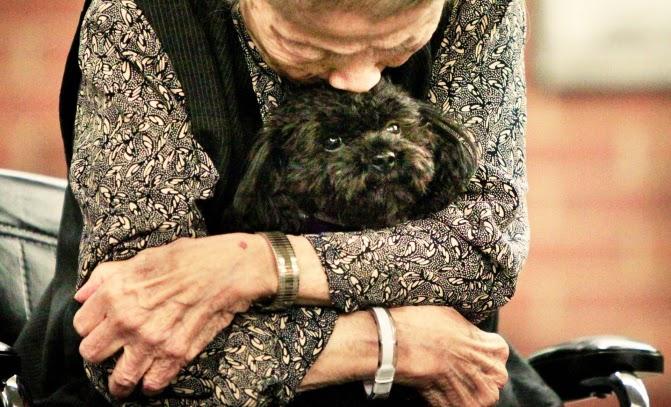 Σκύλος γηροκομείο