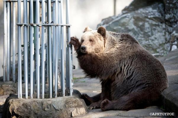 Θεσσαλονίκη ζωολογικός κήπος άγρια ζώα