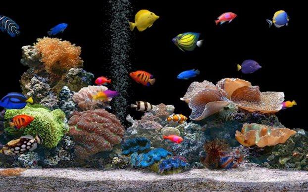 ψάρια ενυδρείο
