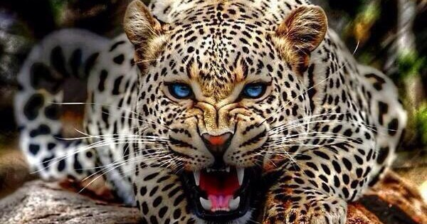 Η γαλανομάτα λεοπάρδαλη που… τρέλανε το Twitter! (φωτο)