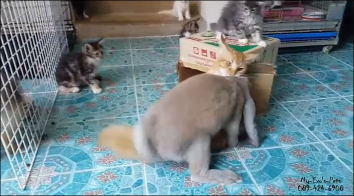 κουνέλι Γάτα