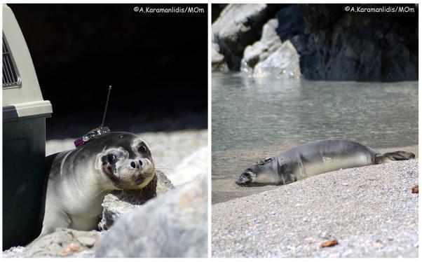 φώκια Εθνικό Θαλάσσιο Πάρκο Αλοννήσου Απελευθέρωση Αλόννησος