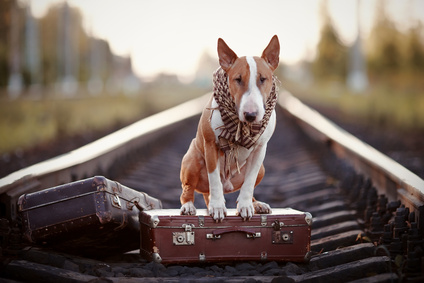 Ταξιδεύοντας με το σκύλο ή τη γάτα μου