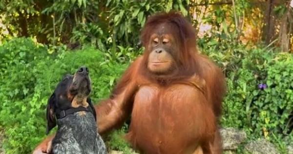 Ασυνήθιστες φιλίες στο ζωικό βασίλειο (βίντεο)