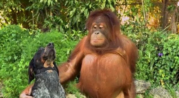 φιλία ζωϊκό βασίλειο ζώα
