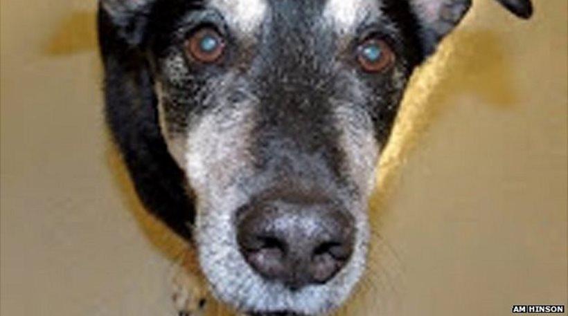 Σκύλος Καρκίνος διάγνωση καρκίνου