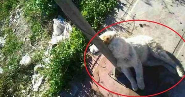 Καλή Παναγιά Ημαθίας: Έπνιξαν και κρέμασαν σκύλο έξω από σχολείο