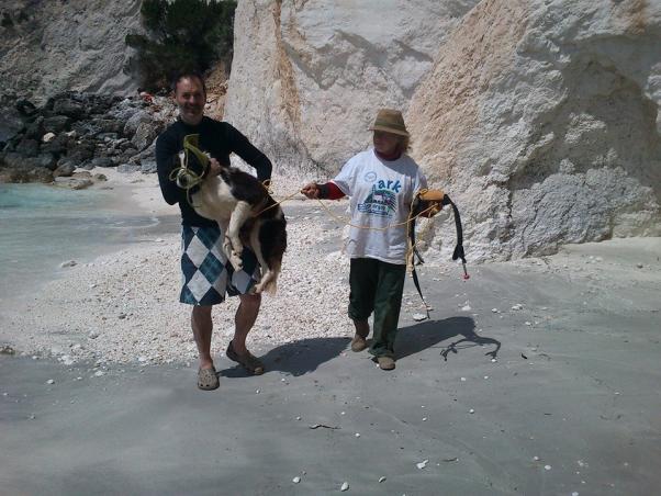 Σκύλος παραλία Κεφαλλονιά διάσωση