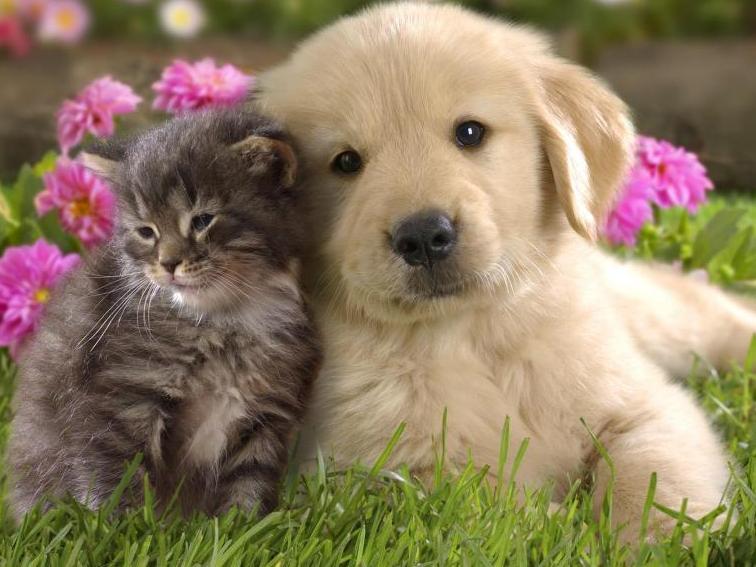Συμπτώματα Σκύλος Καρκίνος διάγνωση καρκίνου Γάτα