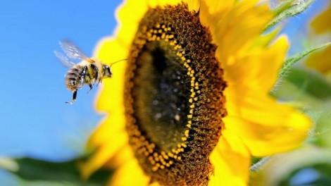 Δείτε τι θα συμβεί αν εξαφανιστούν οι μέλισσες; (Βίντεο)