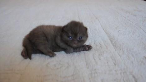 Το γατάκι που είναι εθισμένο στα χάδια (Βίντεο)