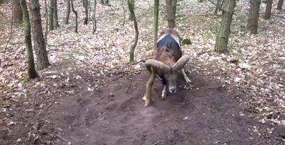 Όταν ο άνθρωπος βοηθά ένα άγριο ζώο (βίντεο)
