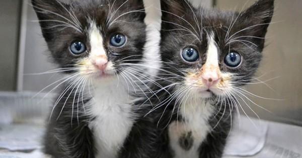 Αυτά τα ζωάκια είναι ίδια σαν δυο σταγόνες νερό