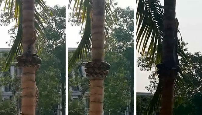 φίδια φίδι δέντρα