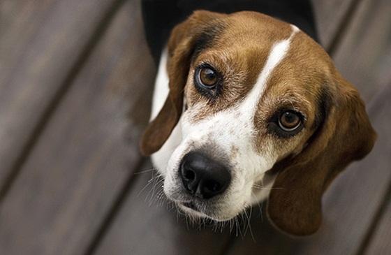 ποινικό αδίκημα εγκατάλειψη ζώων
