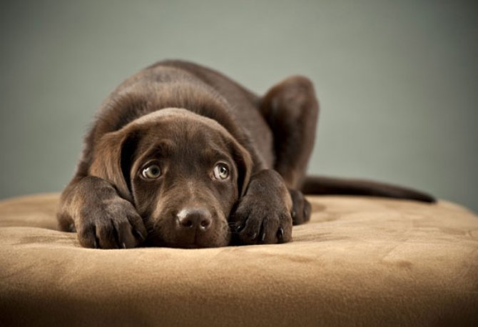 φόβος Σκύλος προστασία θόρυβος βεγγαλικά Ανάσταση
