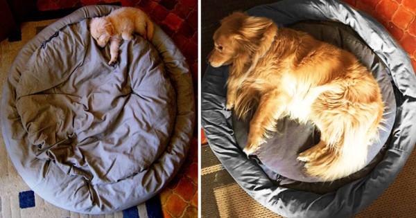 Είκοσι απίθανες φωτογραφίες με σκυλιά που δείχνουν πώς μεγάλωσαν στο χρόνο!