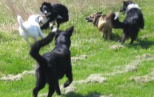 Καταλάβετε τη γλώσσα σώματος του σκύλου όταν παίζει!