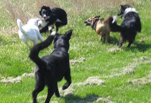 Σκύλος παιχνίδι γλώσσα σώματος