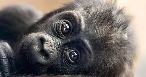 Πανέμορφες φωτογραφίες άγριας ζωής από τη φωτογράφο Marina Cano
