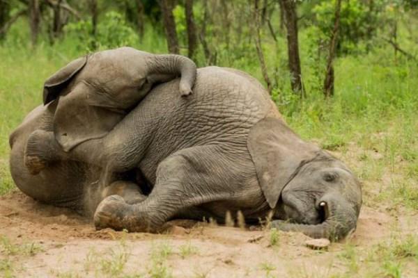 μεθυσμένοι ελέφαντες hangover