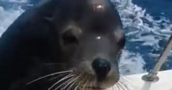 Δε το βλέπουμε συχνά: Φώκια ανεβαίνει σε σκάφος για μία βόλτα (βίντεο)