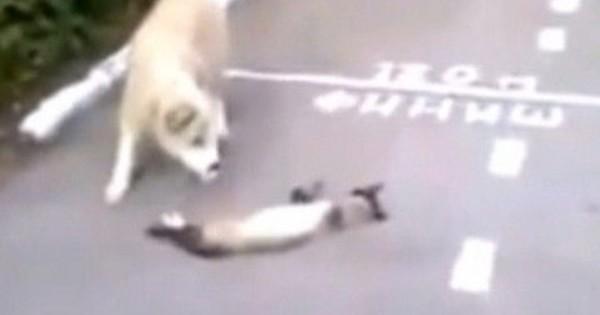 ΞΕΚΑΡΔΙΣΤΙΚΟ: Μια γάτα το παίζει ψόφια στο σκύλο! (βίντεο)